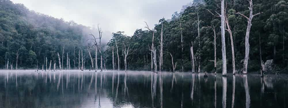 Kayaking A Sunken Forest In Kangaroo Valley