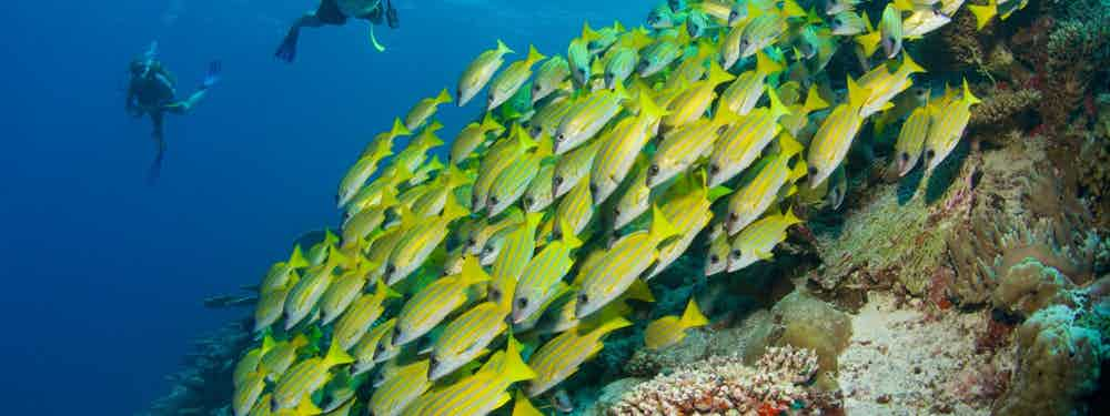 BEST SCUBA DIVING HOLIDAYS IN ASIA