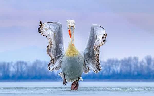 editorial only best bird photograph