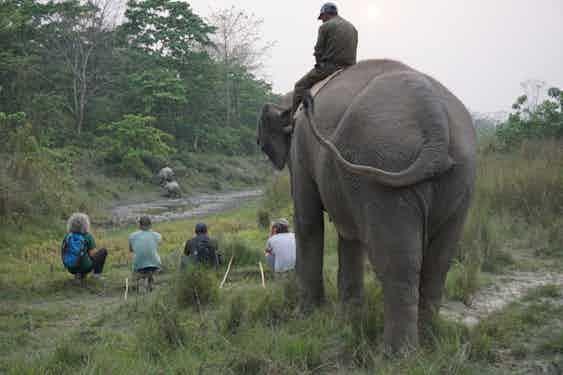 Elephant-walking-safari-rhino-spotting