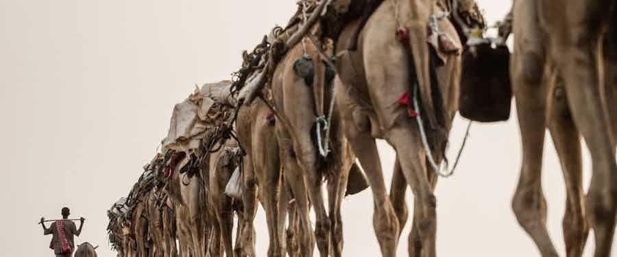 Following a camel caravan in Ethiopia