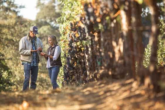 Garden Creek Vineyard