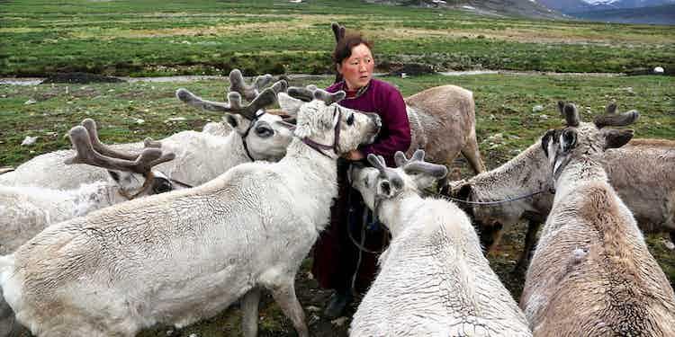 Reindeer Herders Of Mongolia