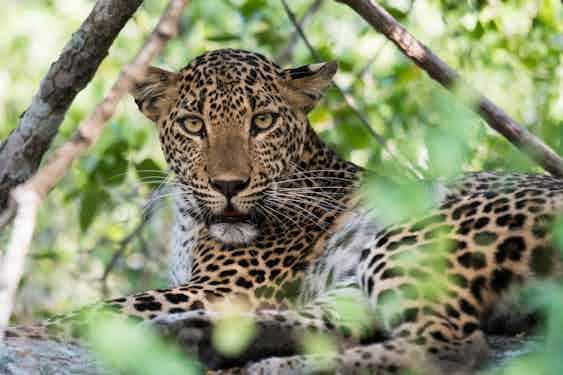 Sri Lanka with Lightfoot Travel
