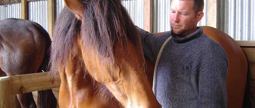 The Horse Whisperer From New Zealand