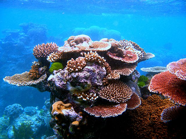640px-Coral_Outcrop_Flynn_Reef