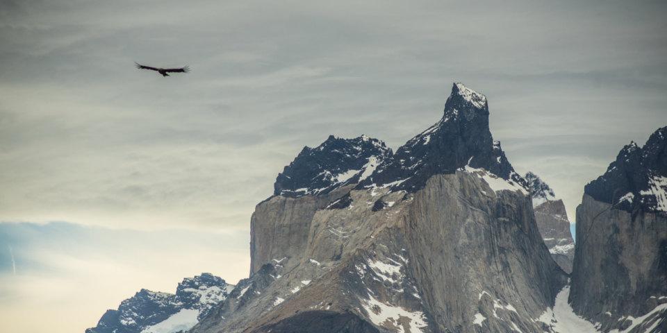 puma-tracking-chilean-patagonia