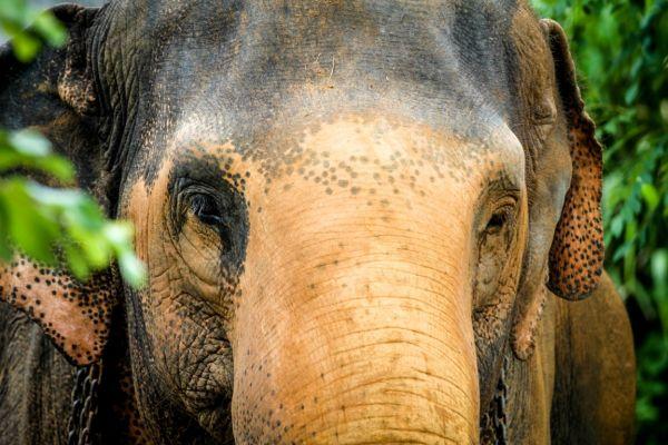 Elephant-Freedom-Project