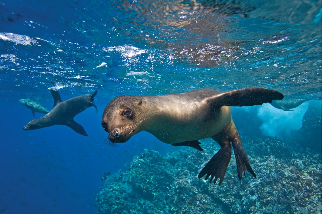 Industry-Footprint_Jeremy-Lindblad_Galapagos_GL364-B