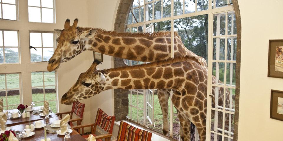 best-wildlife-hotels