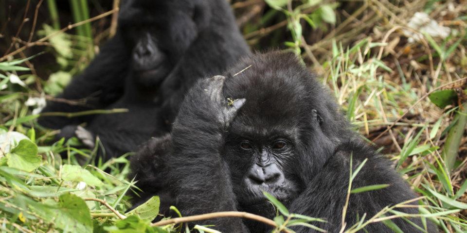 7-best-places-see-wildlife