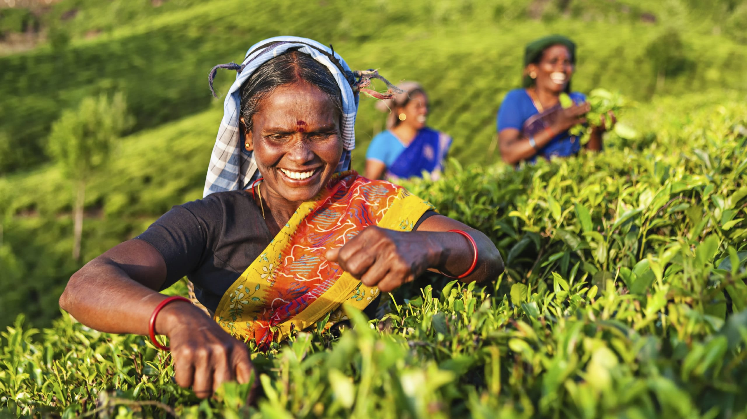 Sri-Lanka_Hill-Country_Tamil-pickers_iStock_000070023121_Large-1