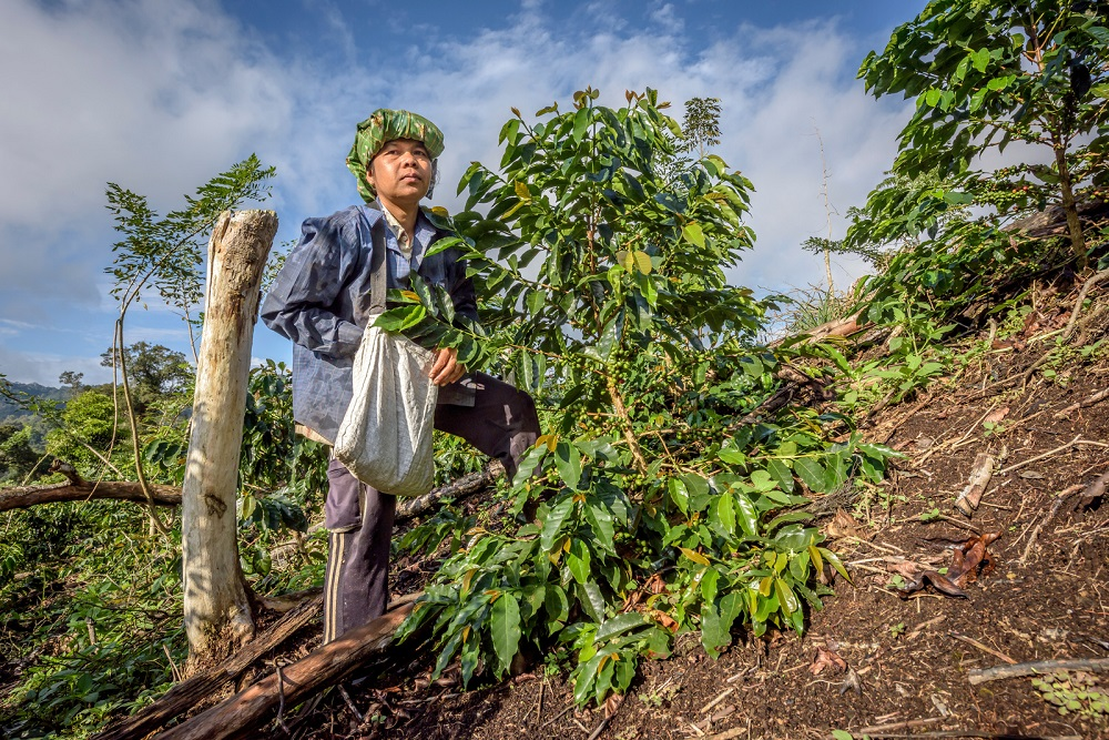 Conservation Intl Sumatra