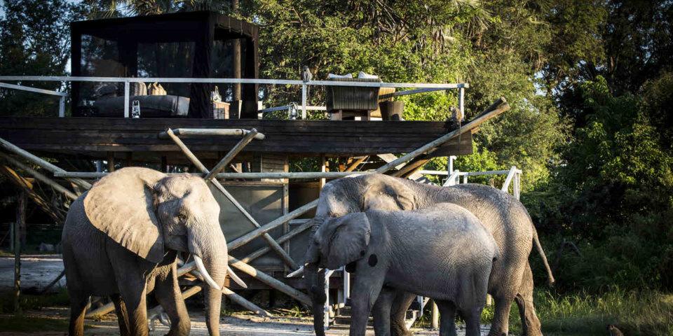wildlife/best-wildlife-hotels
