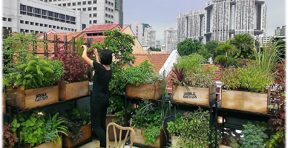 Singapore's Skyscraper Farms
