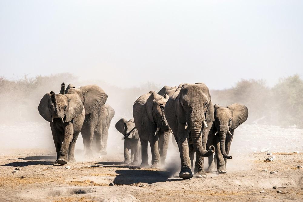 Namibia Desert Elephants