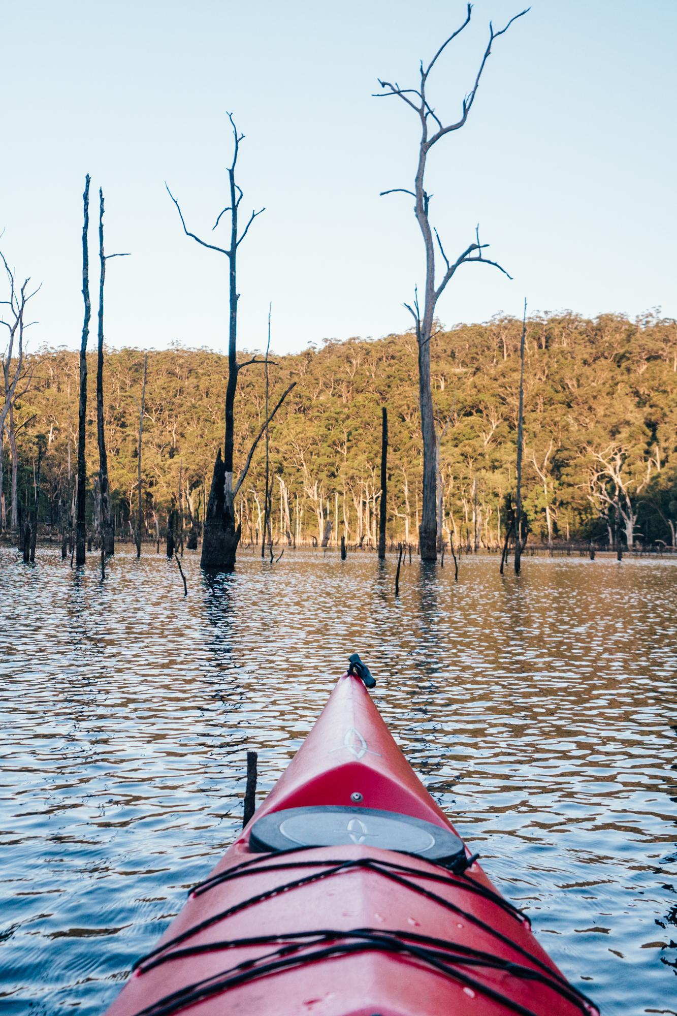 Kayaking A Sunken Forest In Kangaroo Valley