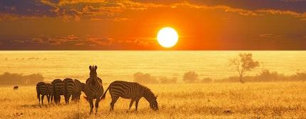 zebras on lake, Etosha National Park