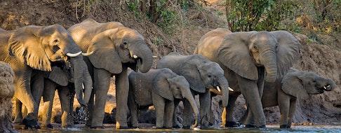 Lower Zambezi National Park. Zambezi River