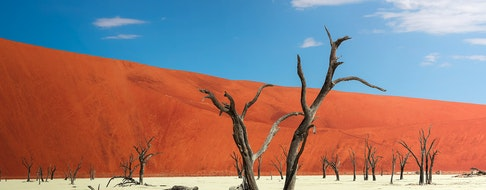 Dead camel thorn trees and the red dunes of Deadvlei near the famous salt pan of Sossusvlei.