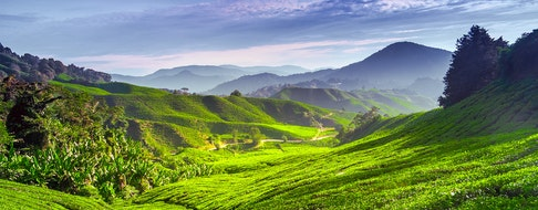 Tea plantation and blue skies in Cameron highlands, Malaysia