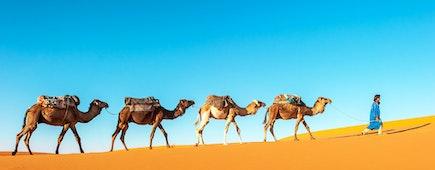 Camel caravan going through the sand dunes in the Sahara Desert, Morocco
