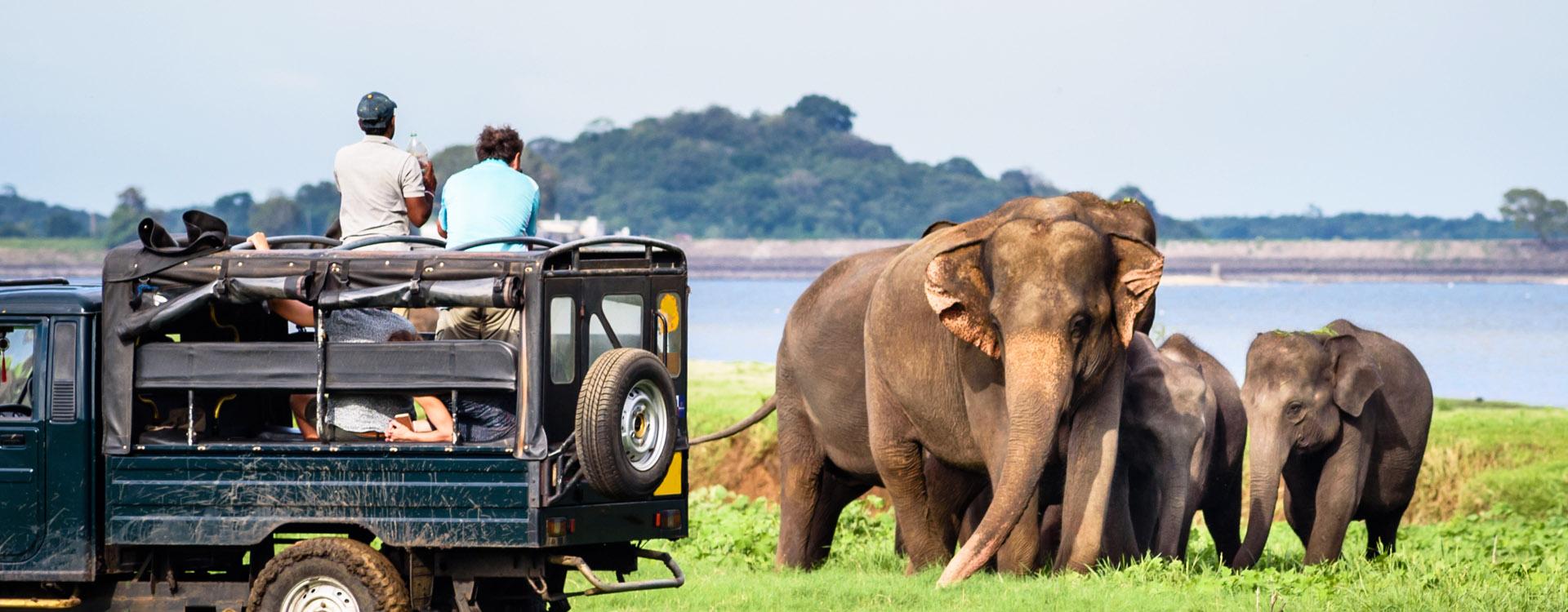 Elepahants safari in Minneriya, Sri Lanka