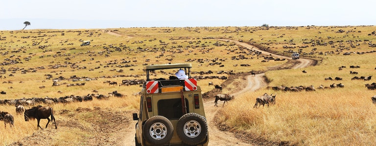 Safari Game Drive during The Great Wildebeest Migration