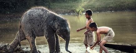 Boys are playing splashing water with baby elephant at pond