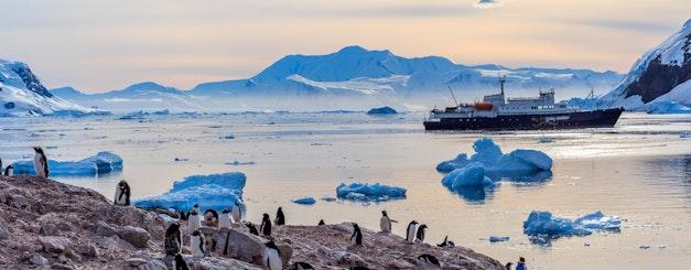 Antarctica_Gentoo Penguins