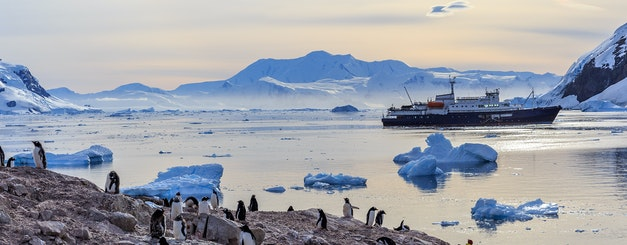 Antarctica_Neco Bay_Gentoo Penguins