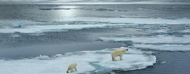 Arctic_Polar Bear & Cub