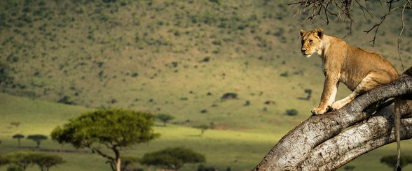 Kenyan Safari & Segara Retreat Offer