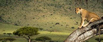 Kenyan Safari & Segara Retreat Offer